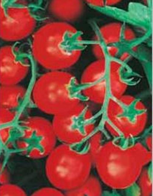 I Pomodori Nani Da Coltivare Nellorto O Sul Balcone Coltivare